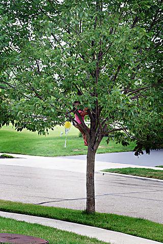 07.15.08 - poppy in tree